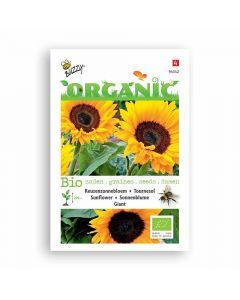 Buzzy® Organic Zonnebloem giganteus  (BIO)