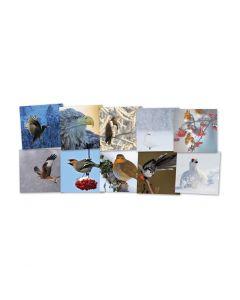 Wenskaarten Wintervogels 10 stuks