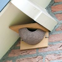 Vivara nestkast huiszwaluw enkel houtbeton
