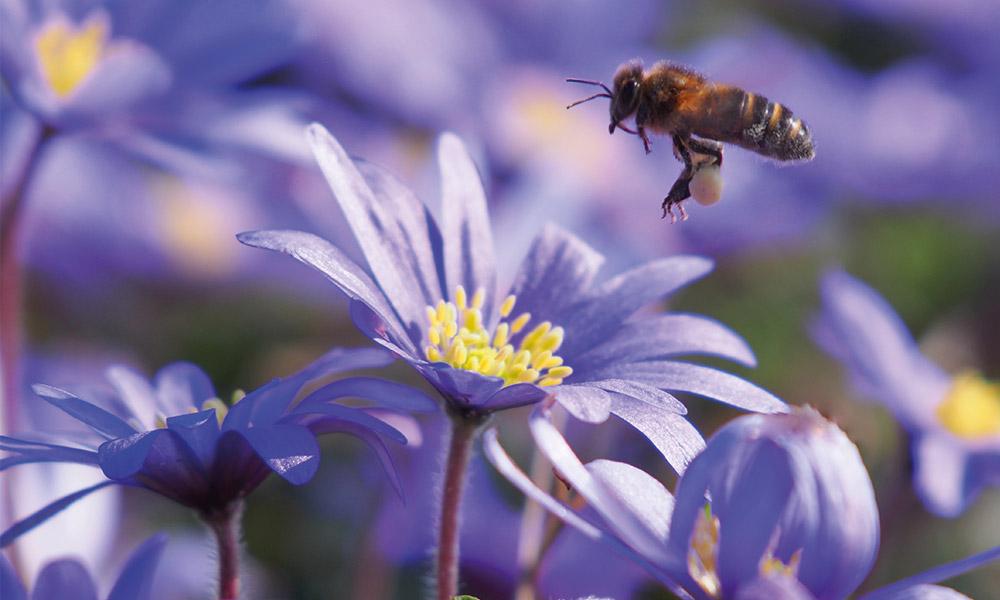 Nieuw - Biologische bloembollen!
