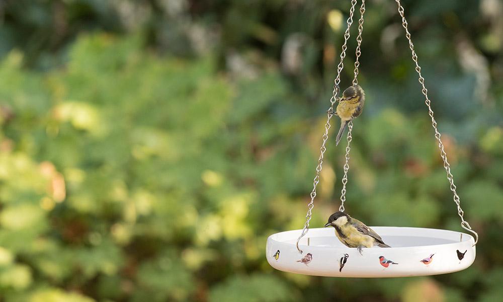 Water voor vogels!