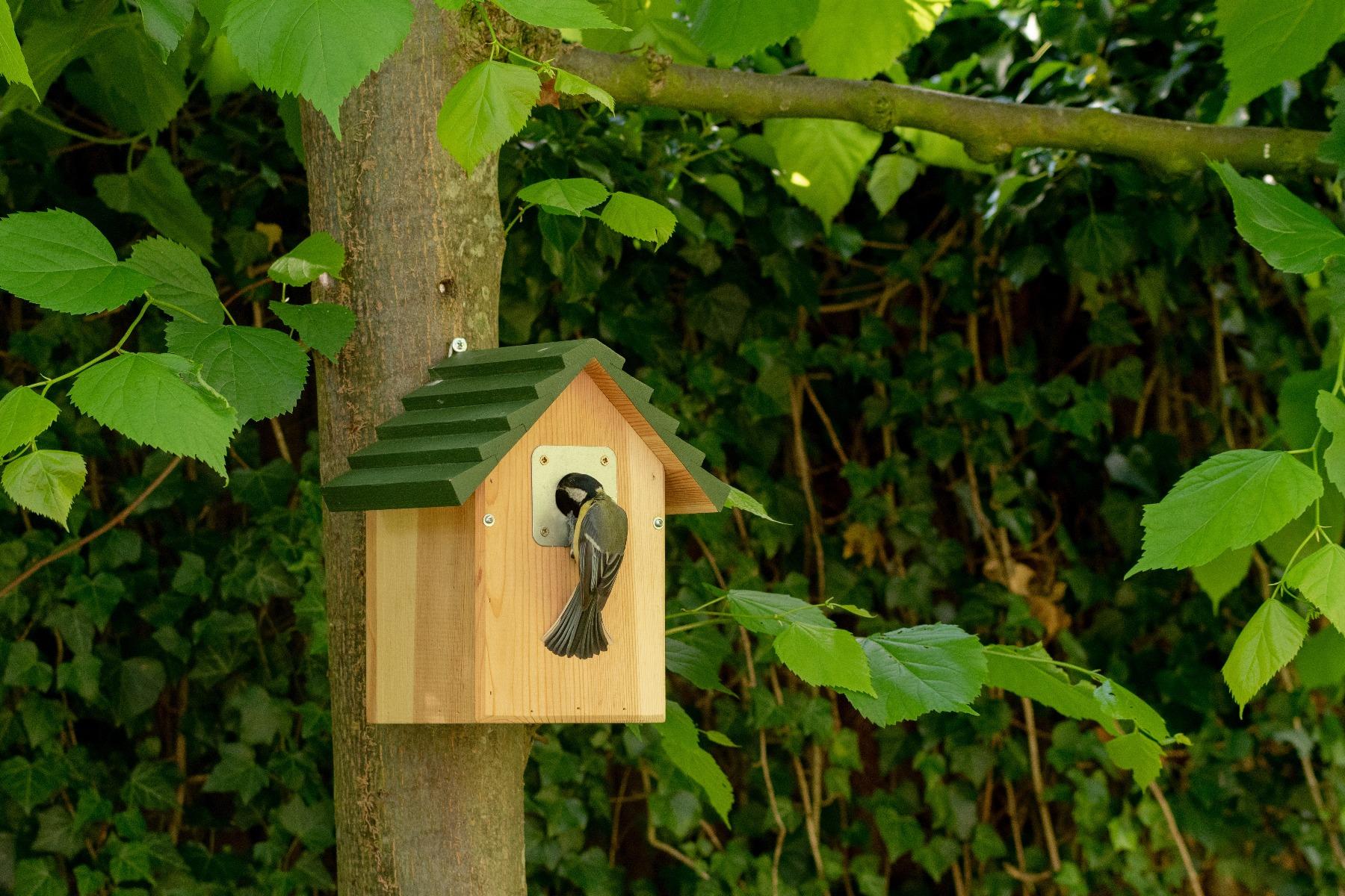 Voortplanting in een vogelvriendelijke tuin