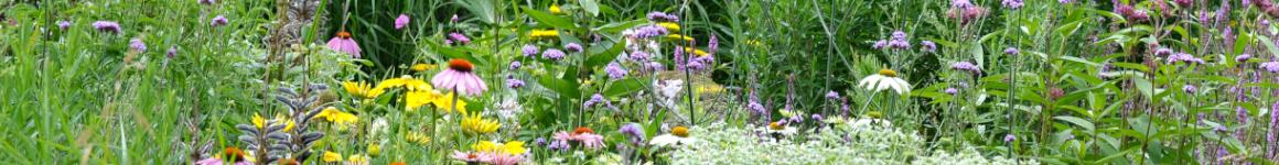 Vaste planten in een vogelvriendelijke tuin