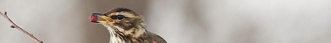 Besdragende struiken in een vogelvriendelijke tuin