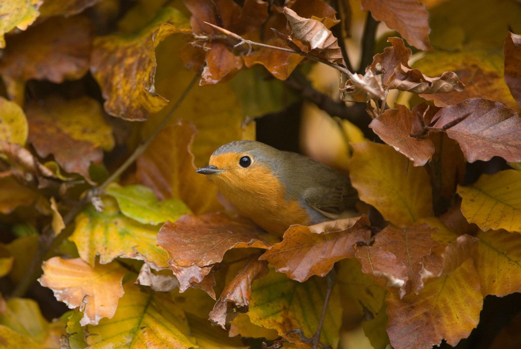 Veiligheid in een vogelvriendelijke tuin