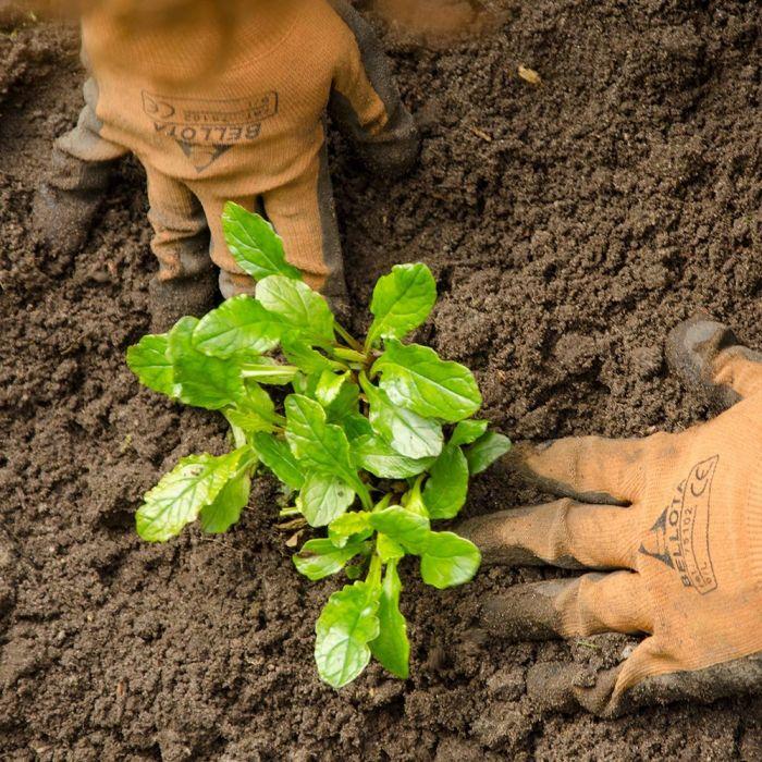 Planten in de grond zetten