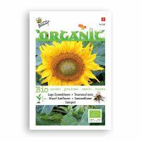 Buzzy® Organic Helianthus annuus type Sunspot  (BIO)