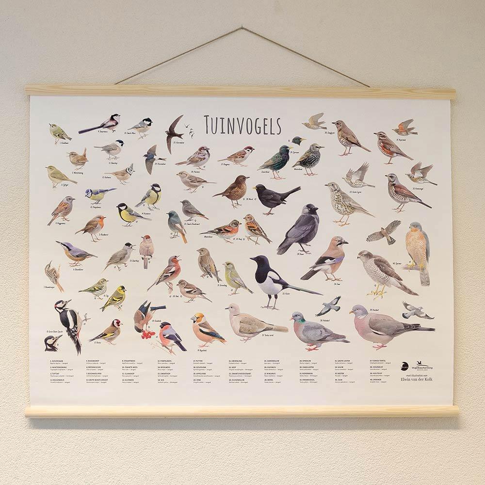 Wandposter Tuinvogels