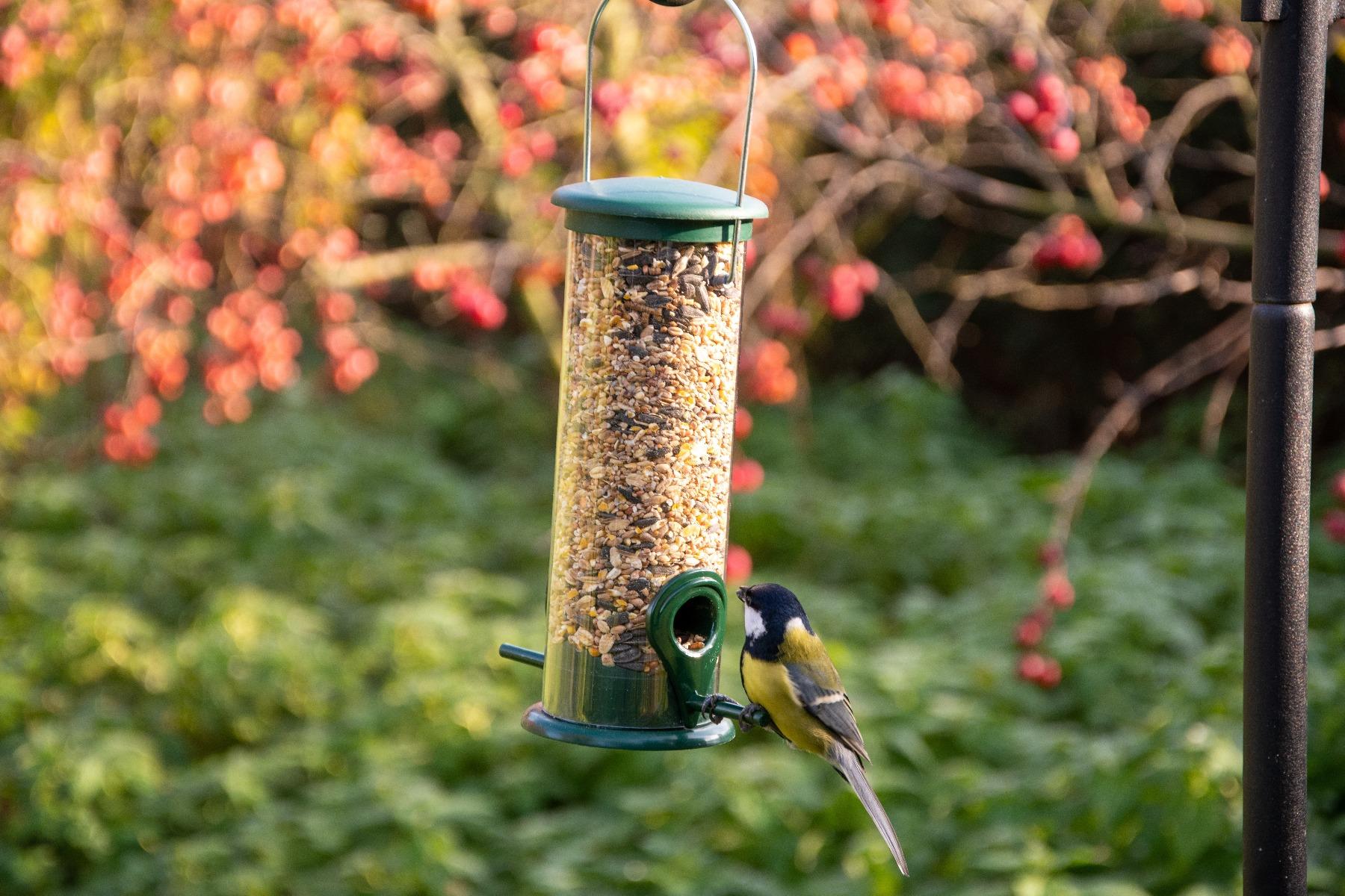 Voedsel in een vogelvriendelijke tuin