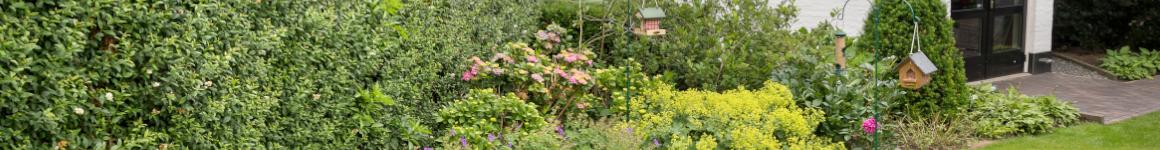 Vogelvriendelijke tuin met planten