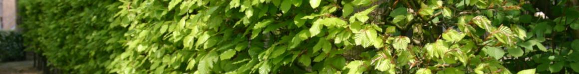 Haagplanten in een vogelvriendelijke tuin